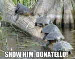 Show Him, Donatello!