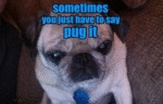 Sometimes You Just Have To Say Pug It!