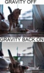 Gravity Off And Gravity Back On