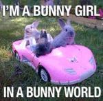 I'm A Bunny Girl, In A Bunny World