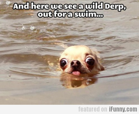 And here we see a wild Derp...
