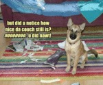 But Did U Notice How Nice Da Couch Still Is?