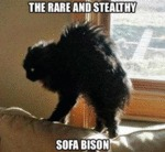 The Rare And Stealthy Sofa Bison