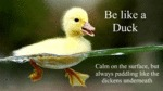 Be Like A Duck, Calm On The Surface But...