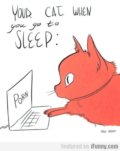 Your cat when you go to sleep
