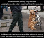 Two Dogs Are Seen Guarding A Bike In China
