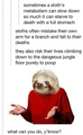 Sometimes A Sloth's Metabolism Can Slow Down..