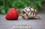 Ambitious Turtle Is Back