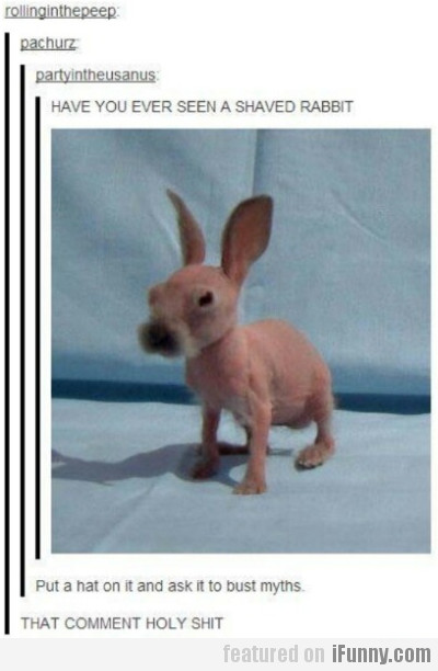 Have you ever seen a shaved rabbit?