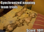 Sychronized Napping Team Trials