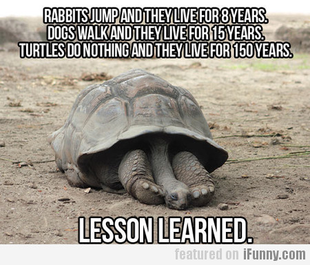 rabbits jump and they live for eight years...