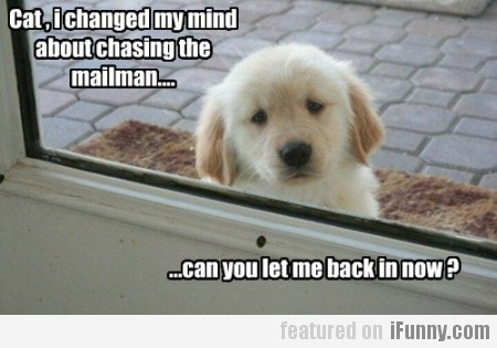 Cat, I Changed My Mind About Chasing The Mailman..