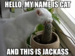 Hello, My Name Is Cat And This Is Jackass