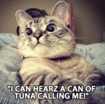 I Can Hearz A Can Of Tuna Calling Me!
