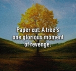 Paper Cut: A Tree's One Glorious Moment Of Revenge