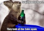 Polar Bears, They Took All The Coke Again