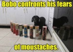 Bobo Confronts His Fears Of Moustaches