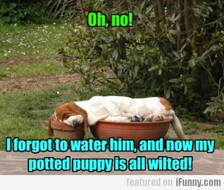 Oh, No! I Forgot To Water Him...