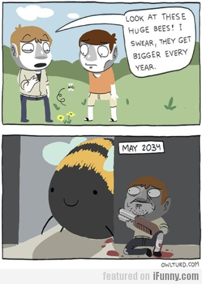 Look At These Huge Bees!