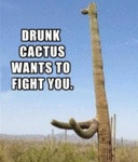 Drunk Cactus Wants To Fight You