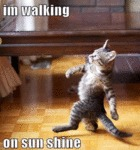 I'm Walking On Sunshine
