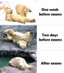 One Week Before Exams...