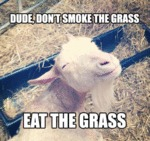 Dude, Don't Smoke The Grass...