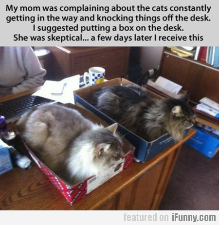 My mom was complaining about the cats...