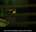 Just A Horse Enjoying A Good Movie, I Guess