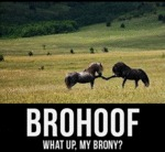 Brohoof. What Up My Brony?
