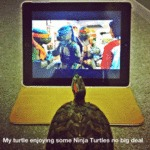 My Turtle Enjoying Some Ninja Turtles, No Big Deal