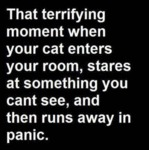 That Terrifying Moment When Your Cat Enters The...