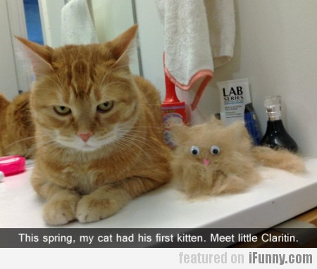 This Spring, My Cat Had His First Kitten..