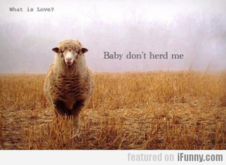 What Is Love? Baby Don't Herd Me