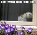 I Just Want To Be Fabulous...