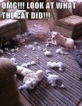 Omg! Look At What The Cat Did