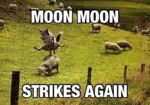 Moon Moon Strikes Again