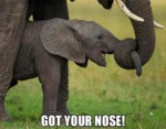 Got Your Nose