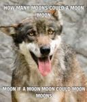 How Many Moons Could A Moon Moon...