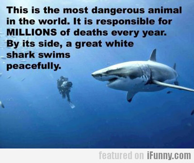 This Is The Most Dangerous Animal...
