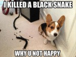 I Killed A Black Snake