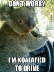 Don't Worry, I'm Koalafied To Drive