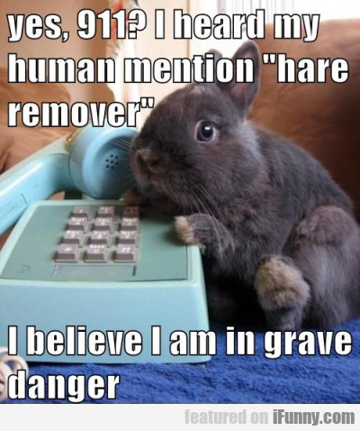 """Yes, 911? I Heard My Human Mention """"hare Remover"""""""