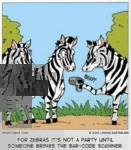 For Zebras It's Not A Party Until Someone...