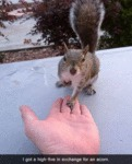 I Got A High-five In Exchange For An Acorn.