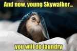 And Now, Youn Skywalker... You Will Do Laundry
