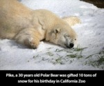 Pike, A 30 Year Old Polar Bear Was Gifted...