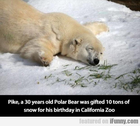 Pike, a 30 years old Polar Bear was gifted...