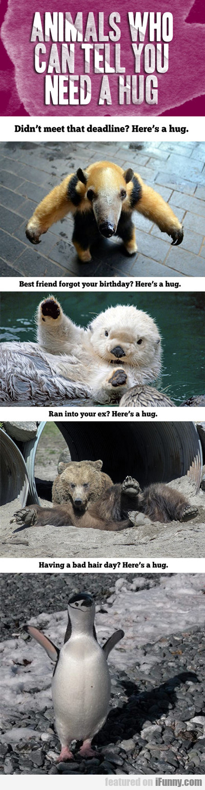 Animals Who Can Tell You Need A Hug...