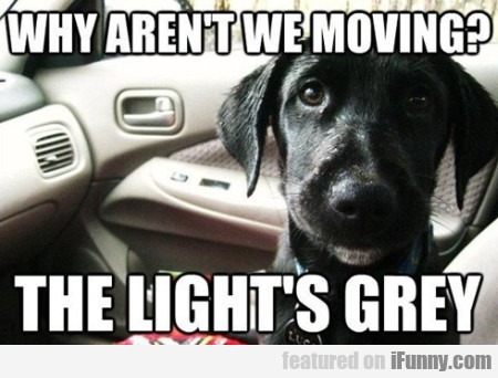 Why Aren't We Moving? The Light Is Grey!
